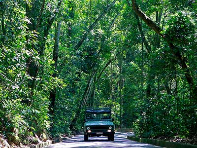 Jeep Tour Tijuca Forest 04