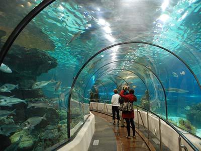 Boulevard Olímpico - Passeio Museu do Amanhã e AquaRio - Nattrip (5)