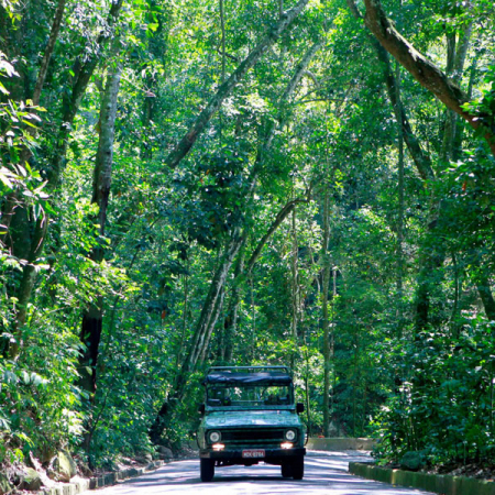 Jeep Tour Floresta da Tijuca