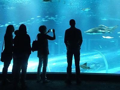 Boulevard Olímpico - Passeio Museu do Amanhã e AquaRio - Nattrip (11)