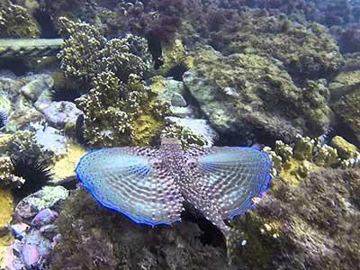 Mergulho em Arraial do Cabo