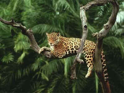Amazon Jungle Lodge Brazil 5