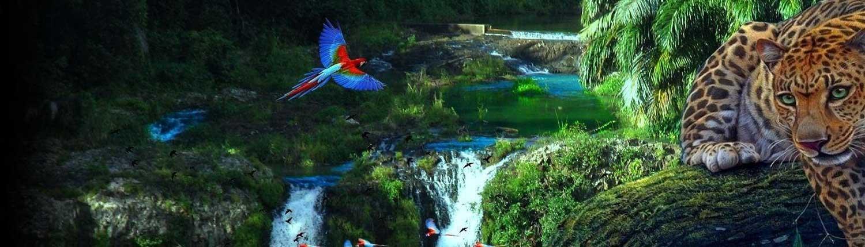 Amazon Rainforest - Travel in Brazil wide-1