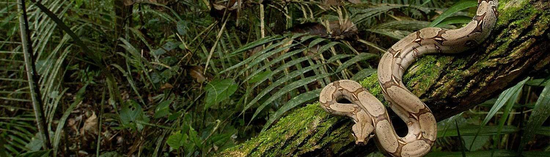 Amazon Rainforest - Travel in Brazil wide-2