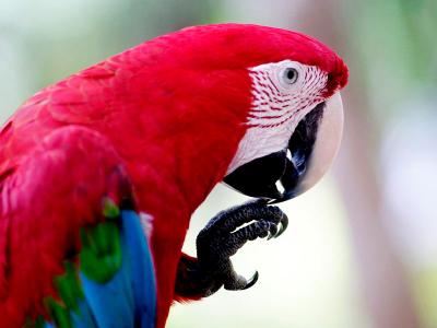 Viagem para Amazonia Fauna 1