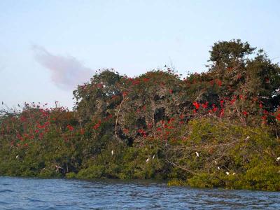 Viagem para Lencois Maranhenses Revoada dos Guaras