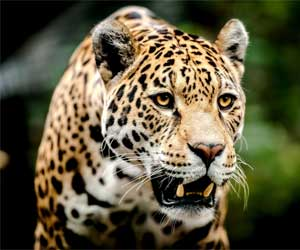 Brazil Wildlife Tours big-five-4