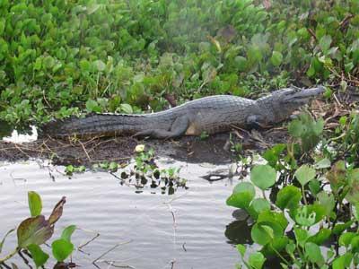 Vida Salvaje de Pantanal 06