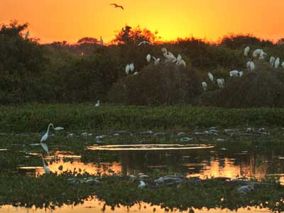 Pantanal Wildlife Tour 6